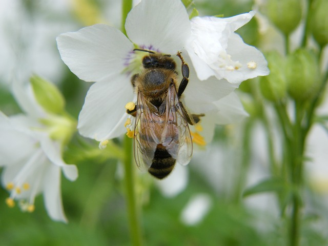 méhpempő