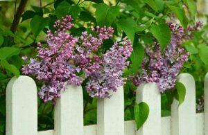 Ideális kerítések